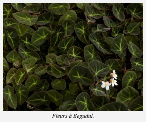 fleurs-begudul-bali-indonesie