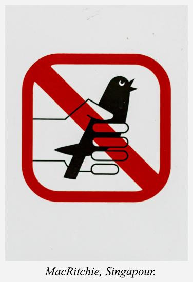 interdiction-oiseaux-macritchie-singapour