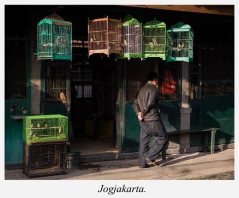 marche-aux-oiseaux-jogjakarta-indonesie